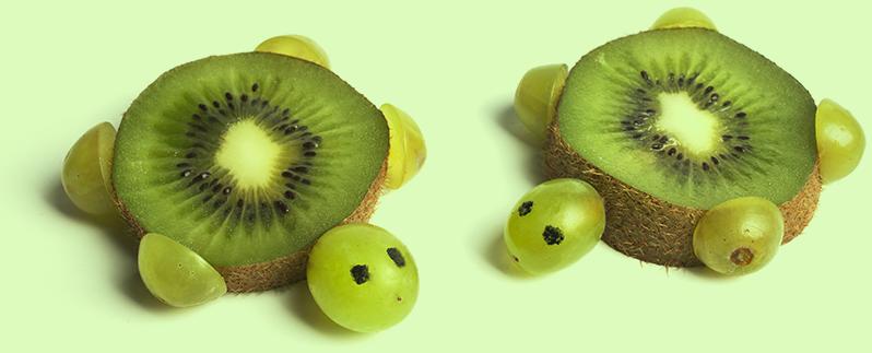 Tortues kiwi